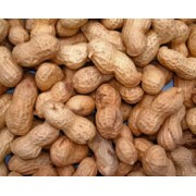 Monkey Nuts In Shell – 11.33kg
