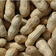Monkey Nuts – 1kg