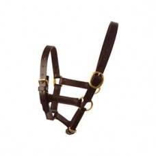 Leather Foal Headcollar Black - One Size