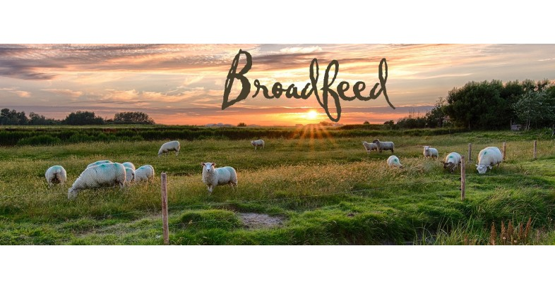 Broadfeed Sunset Banner