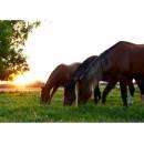 Horse Feed