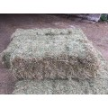Hay Bale ***ONLY JUNE 2020 HAY AVAILABLE*** (***2019 HAY OUT OF STOCK***)