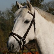 JHL Flash Bridle - Brown  (available in 3 sizes)