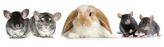 Small Animal Food at Broadfeed